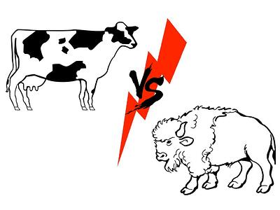 Cow vs Buffalo